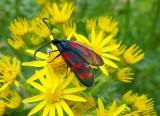 Scottish Wildlife - Definitive list