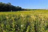 Prairie on the Hill