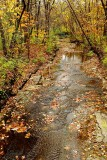 Fall Along a Creek