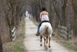 Let That Pony Run