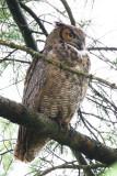 Keeping an Eye on an Owlet