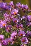 October Wildflowers