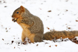 Nibbling on Nuts
