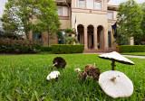 Farbar mushrooms