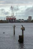 Middlesbrough  16_d800_1395