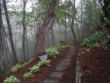IMG_7794 Foggy Mountain Morning