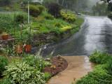P1150211 It's raining ,it's pouring...