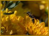 Strange Behavior from Wasp