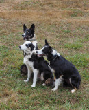 Canine Capers -   All Things Dog