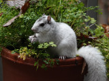 DSC01738 In my parsley pot?!!!!