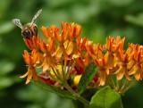 DSC02903 feeding bee.jpg