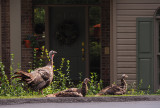 P8080194 mom 2 babies front door.jpg
