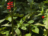 PZ150119 On my morning photo op hunt...