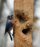 New Audubon Society Bird Food Recipe