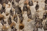 Bats in the Crusader Citadel