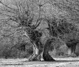 South East England - Outside the M25