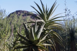 Desert Botanical Garden - Phoenix