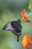 Papillons en liberté  2016