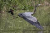 Oiseaux - Birds