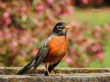 April Robin