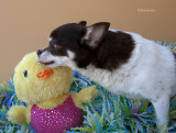 Kissing the Easter Chick
