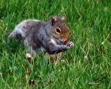3 Ear Squirrel
