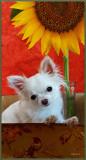 Bailey & the Sunflower
