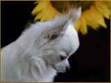 Bailey & 2016 Sunflower