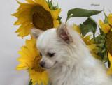 Bailey & the Sunflowers