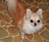 Senior Puppy