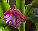 Still Blooming 4-18