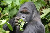 Virungas National Park - Mikeno / Bukima