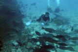 Dive 17-18-19 Richelieu Rock