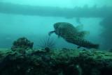 Dive 5 - Phi Phi Wreck