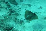 Dive 10 - Turtle Rock