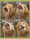 kaw yawn.jpg