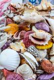 Shells at market