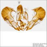 IMG_4631 genitalia.jpg