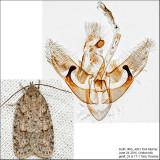 0911 - Bibarrambla allenella IMG_4961.jpg