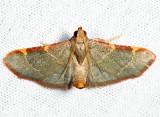 5530 - Pink-fringed Dolichomia - Hypsopygia binodulalis