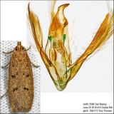 1142 – Glyphidocera septentrionella IMG_5588.jpg
