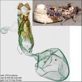 2861 – Off-white Hedya Moth – Hedya ochroleucana IMG_5778.jpg