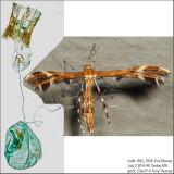6102 – Dejongia lobidactylus IMG_5928.jpg