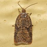 Moths February
