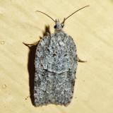 3557 - Acleris maximana