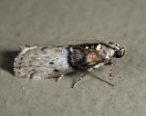5808 - Tlascala reductella