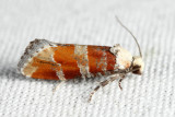 3066 - White Pine Shoot-borer - Eucopina gloriola