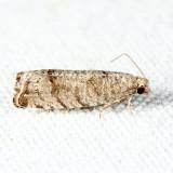 3110 - Eucosma gomonana