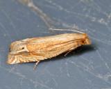 3142 - Pelochrista cataclystiana