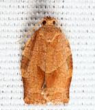 3635 - Oblique-banded Leafroller - Choristoneura rosaceana 9-6
